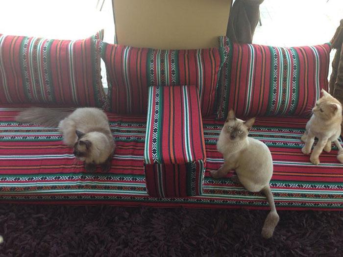 5c9afcb7a دبي تحتضن أول مقهى لمحبي القطط! - مجلة هي