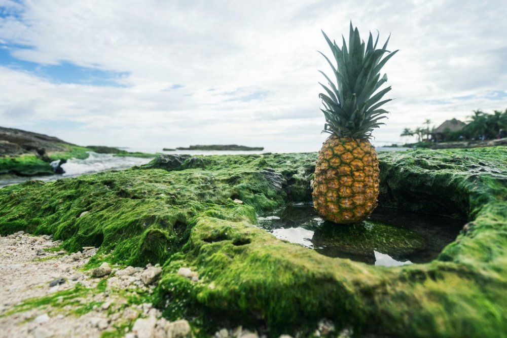 أكومال AKUMAL بواسطة Pineapple Supply Co