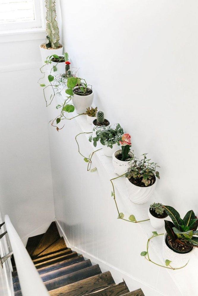 أفكار تزيين ديكور المنزل بالنباتات الطبيعية - مجلة هي