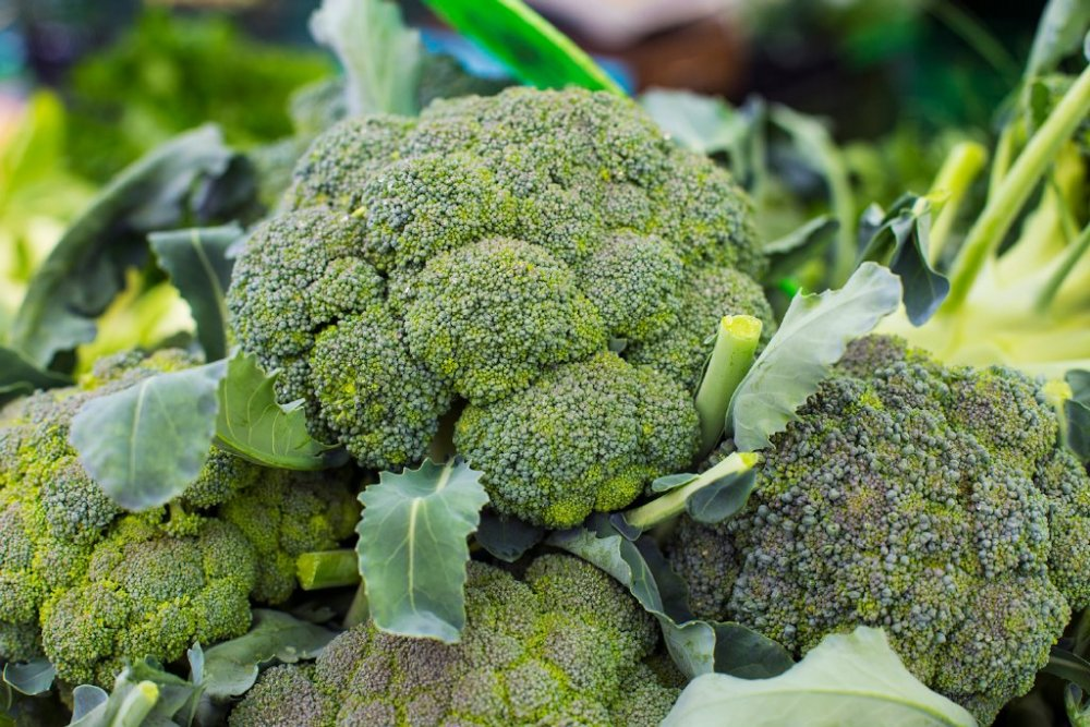 البروكولي من الاطعمة الرائعة لانقاص الوزن