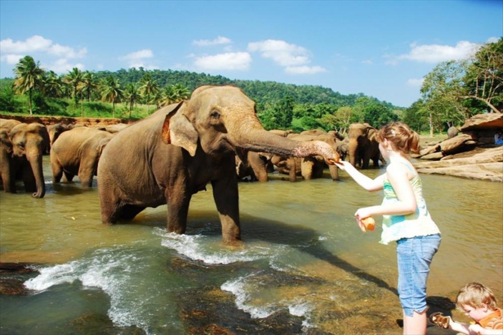 سفاري الفيلة في كاندي هو مكان صغير يبعد عن مدينة